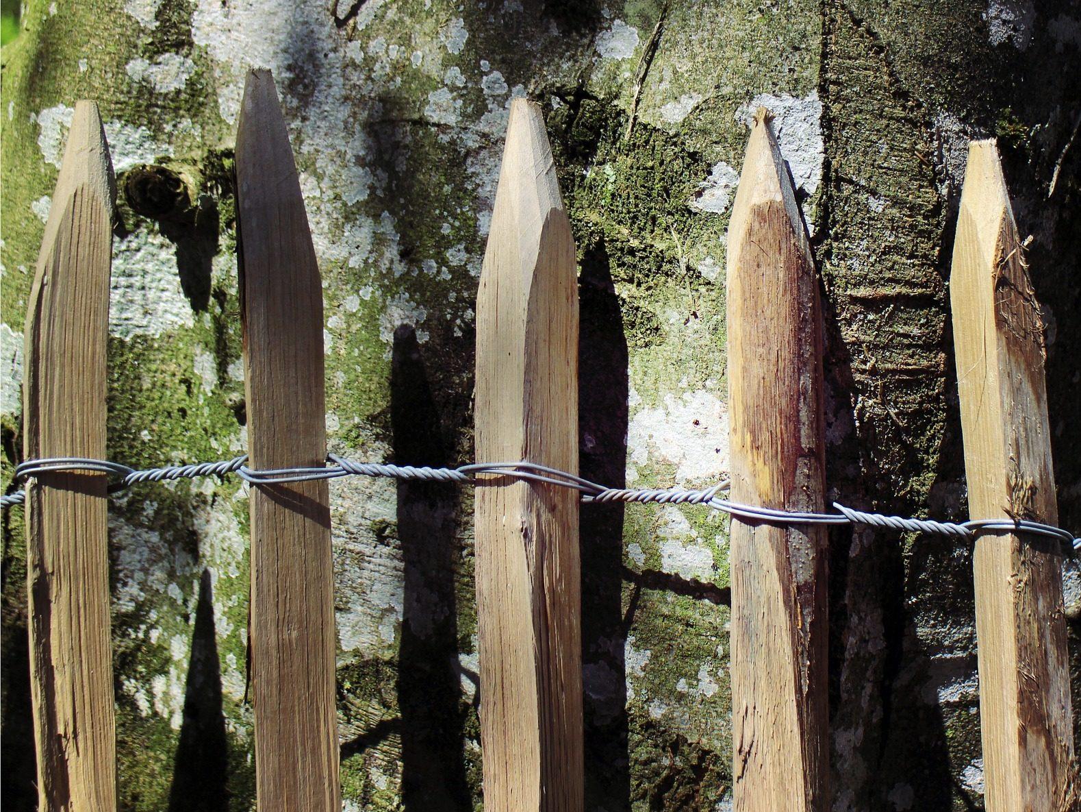 staketenzaun Kastanie