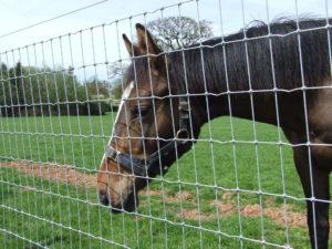 MultiUseNet für Pferde