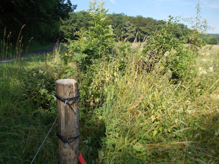 Weidezaun Wartung nötig Naturschutzzaun freimähen