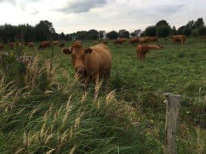 Naturschutzzäune Rinder Extensive Weidehaltung