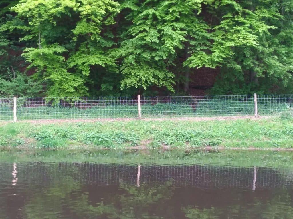 Schutz der Teichanlage vor 2 & 4 Beinern