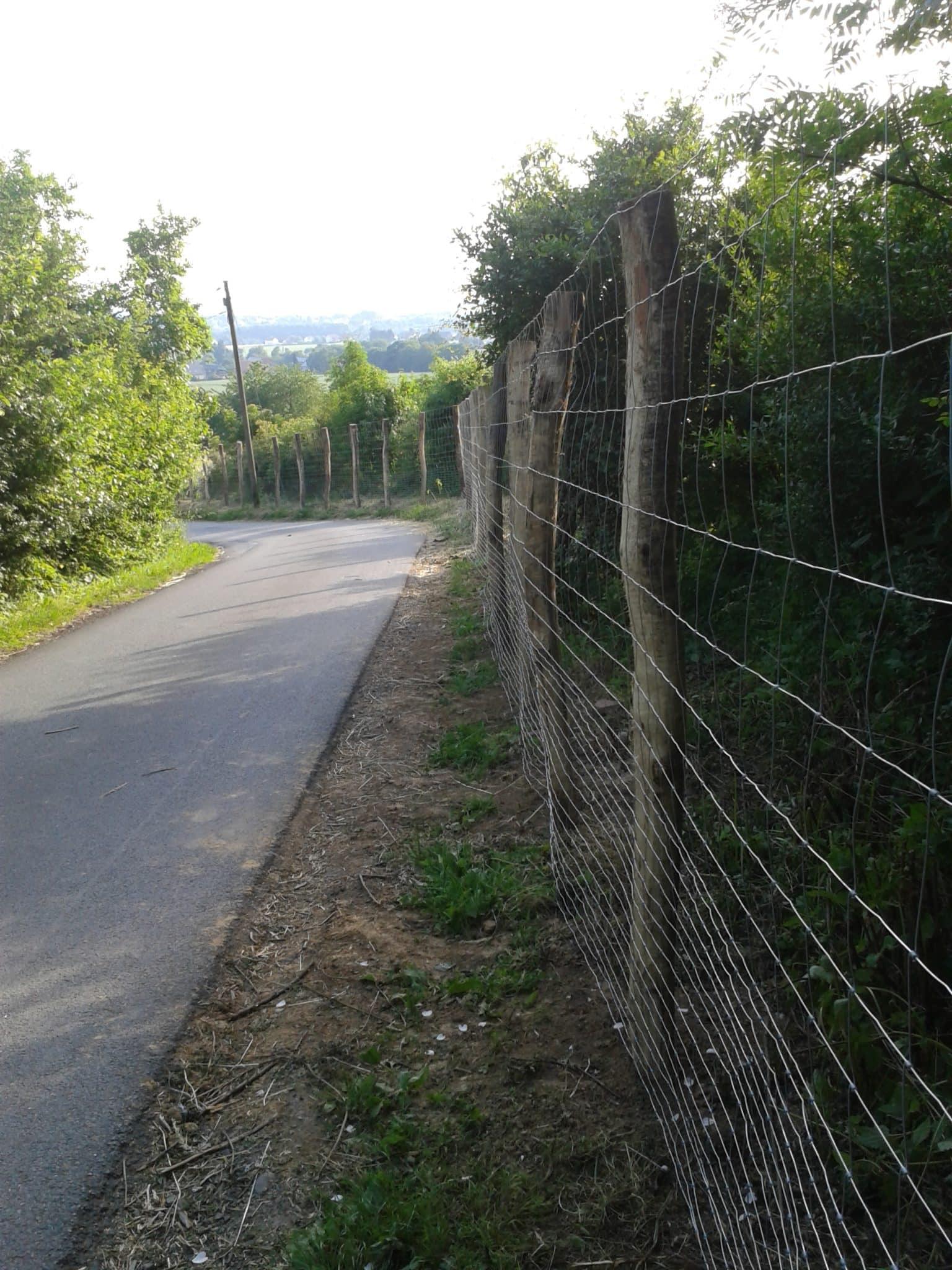 Knotengeflecht Wildschutzzaun Hille