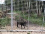 Wildschweingehege