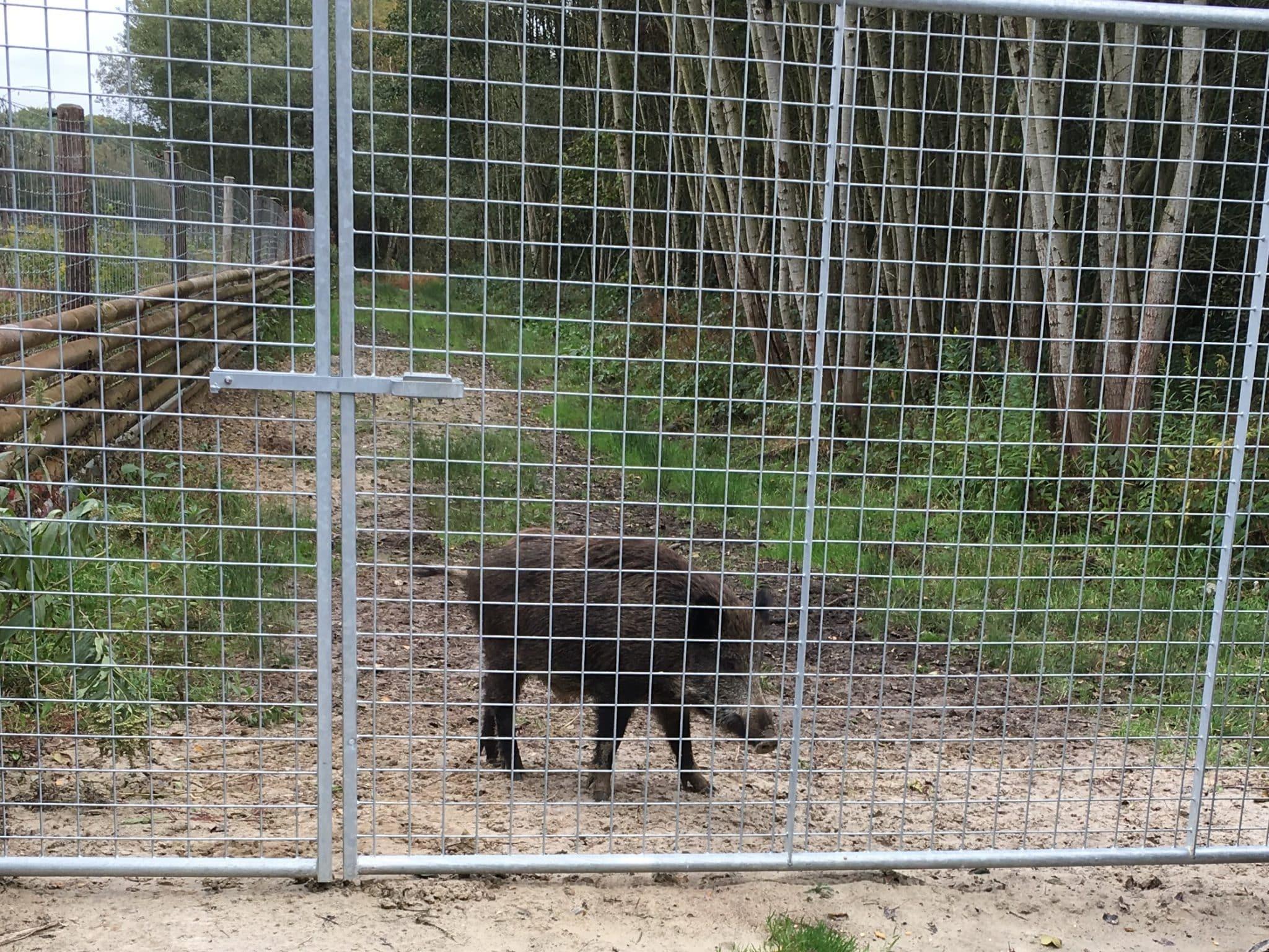 Forstschutzzaun Forstzaun ASP Prävention Wildschweingehege