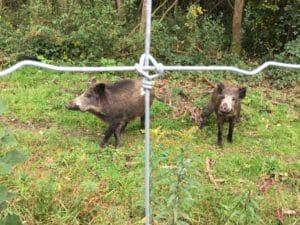 Tierpark Wildgehege Supernet gegen Wildschweine