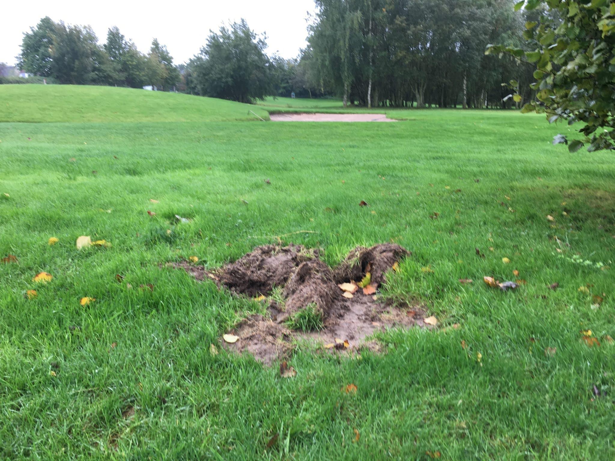 Der schweinesichere Golfplatz