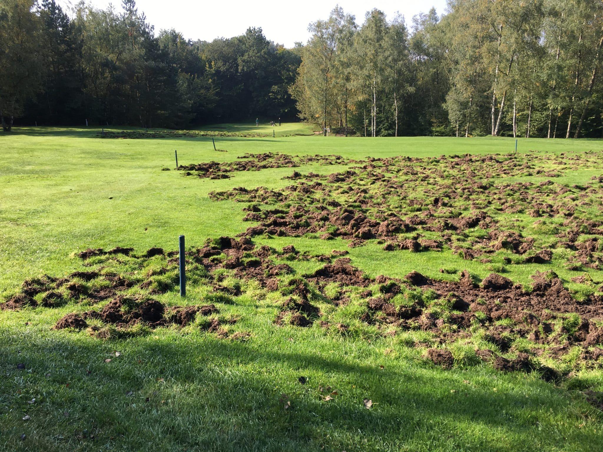 Wildschweinzaun Wildschweinschutzzaun Bahn auf Golfplatz nicht bespielbar Elektrozaun für Golfer
