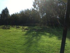 Schaden durch Wildschweine Golfplatz Wildschweinzaun Wildschweinschutzzaun