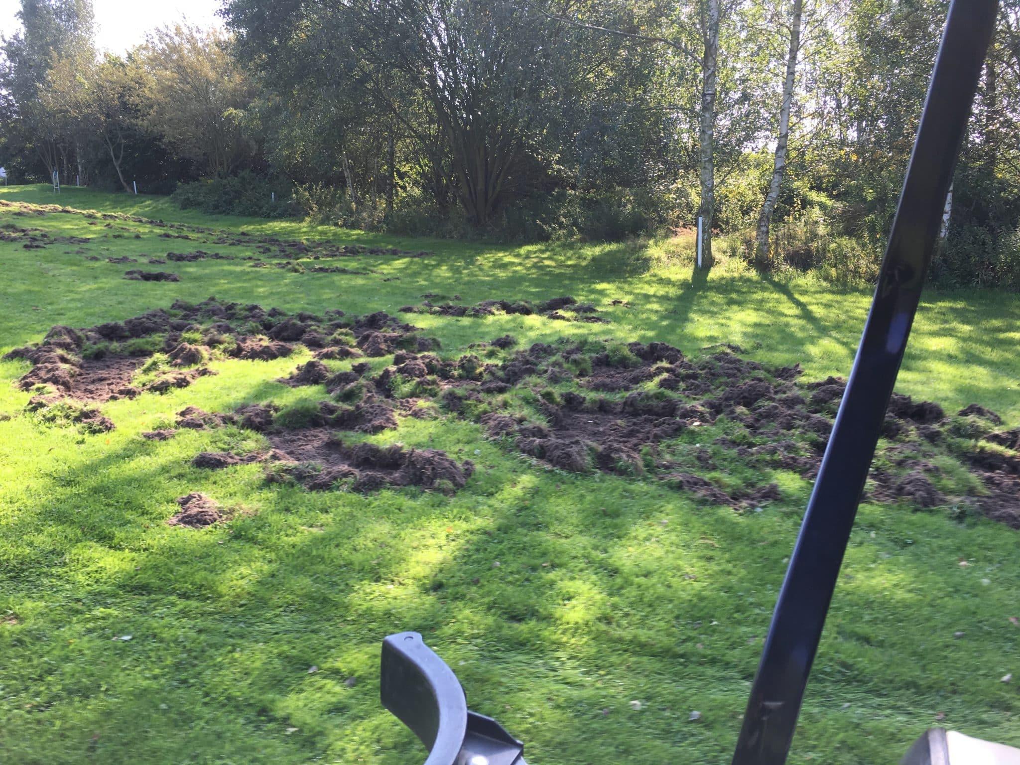 Wildschweinzaun Wildschweinschutzzaun Wildschwein Schaden Golfplatz