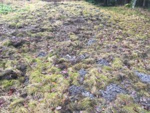 Wildschweinzaun Wildschweinschutzzaun Wildschweinschaden im privaten Garten