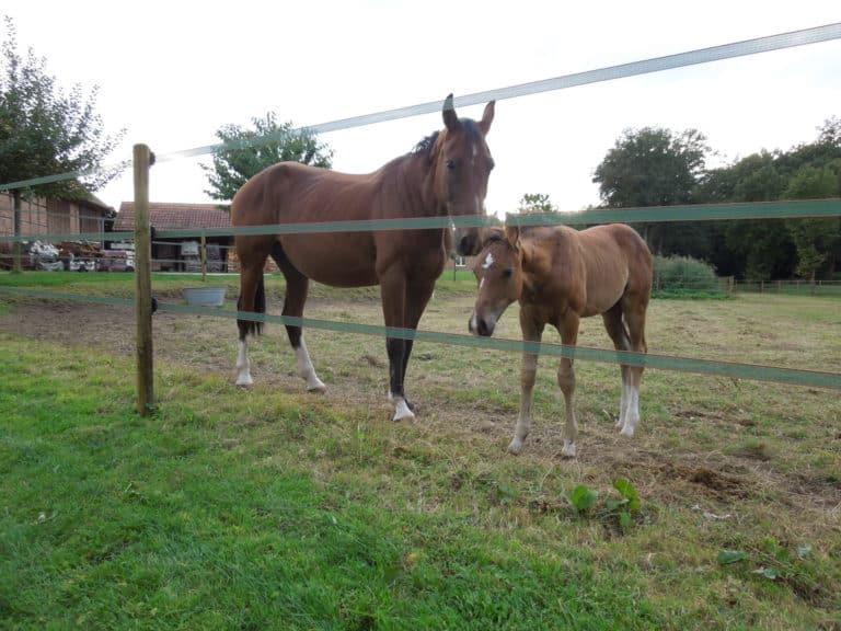 Elektro-Weidezaun Pferdekoppeleinzäunung mit 3 Bändern