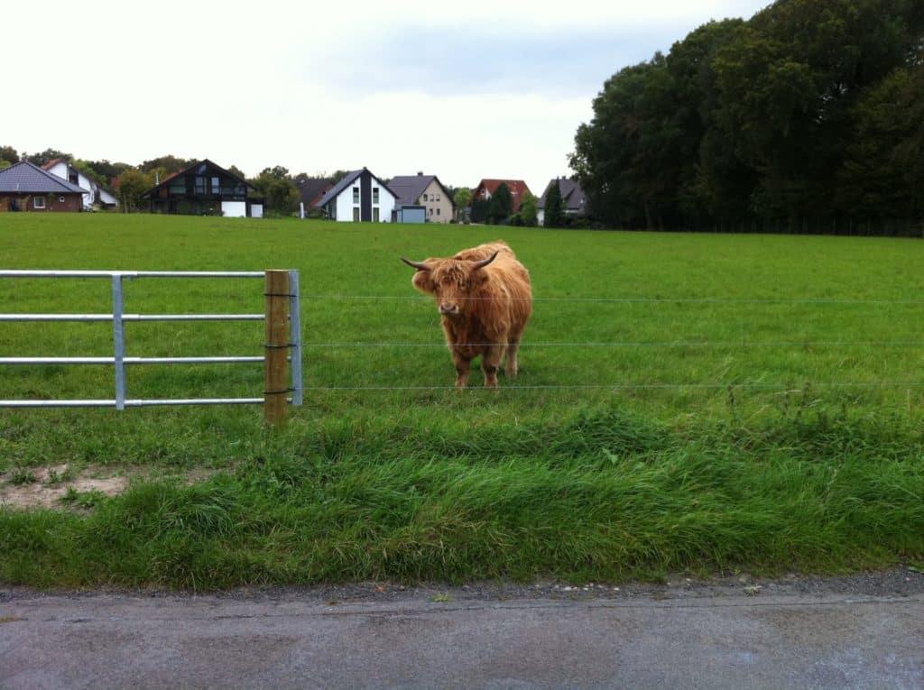 Glattdraht elektrozaun Rinder Insultimber