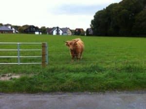 Elektro-Weidezaun Glattdraht elektrozaun Rinder Insultimber