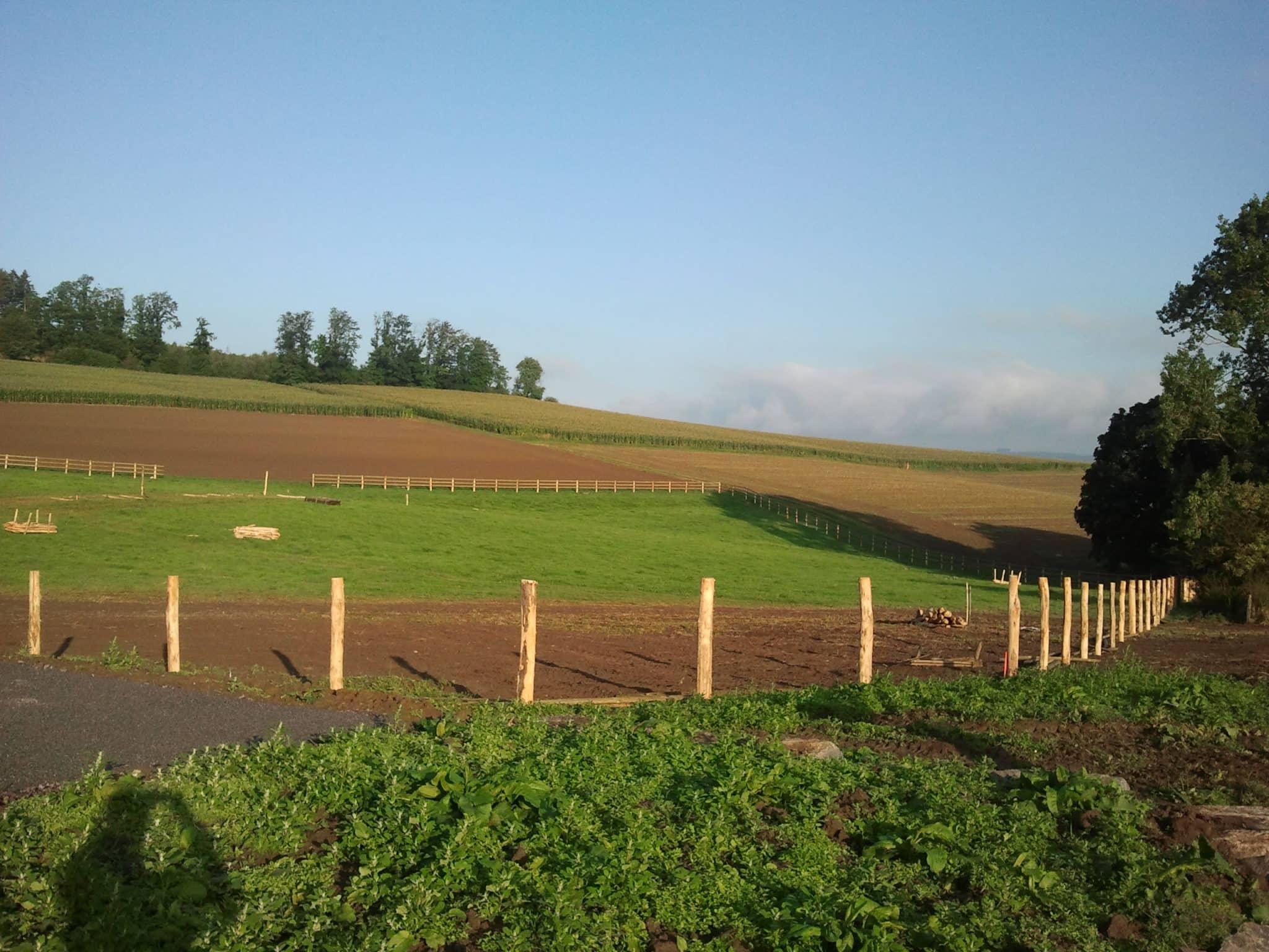 Koppelzaunbau im Sauerland