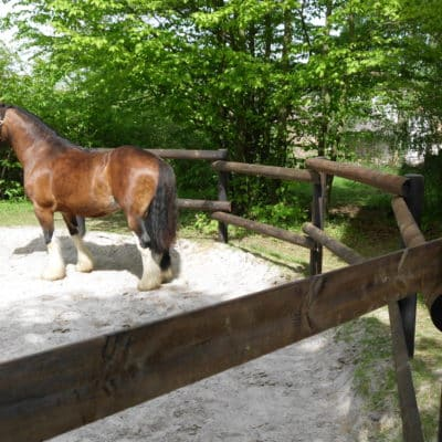 Roundpen Longierzirkel mit Pferd