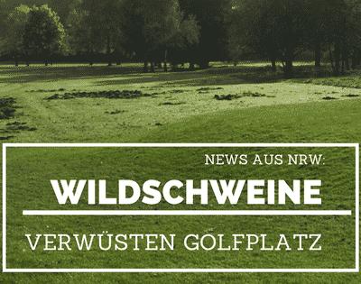 Schutz vor Wildschweinen auf dem Golfgreen