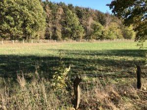 Schafhaltung Zaun Geflecht