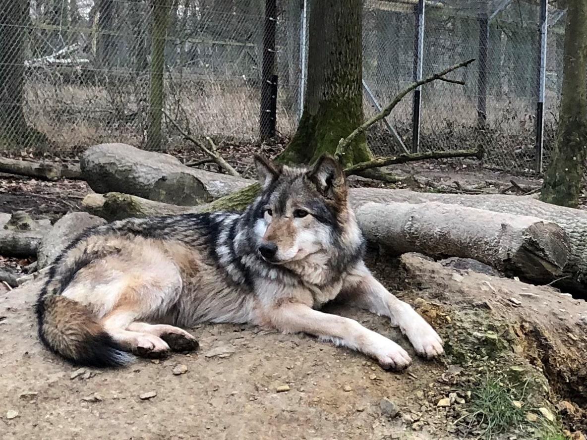 Wolfschutzzäune