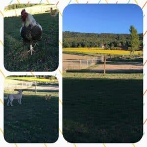 Kangalrudel Zaun zur Hundehaltung
