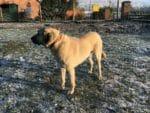 Zaunanlage für Herdenschutzhunde Kangal Zaun