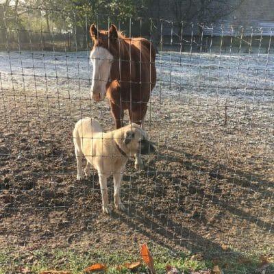 Hundezaun Zaun Kangal Herdenschutzhund Pferdezaun