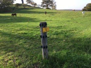 Elektrozaun für Rinder