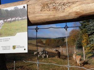 Wolfschutz für Alpaka