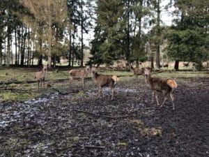 DAmwild Gehegebau Elchgehege Wildpark Tierpark