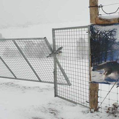 Wolfschutzzaun der mehr kann