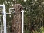 SWG Schwarzwildgatter Gehegeüberwachung Sabotageüberwachung