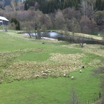Teichanlage Otterschutz Otterschutzzaun