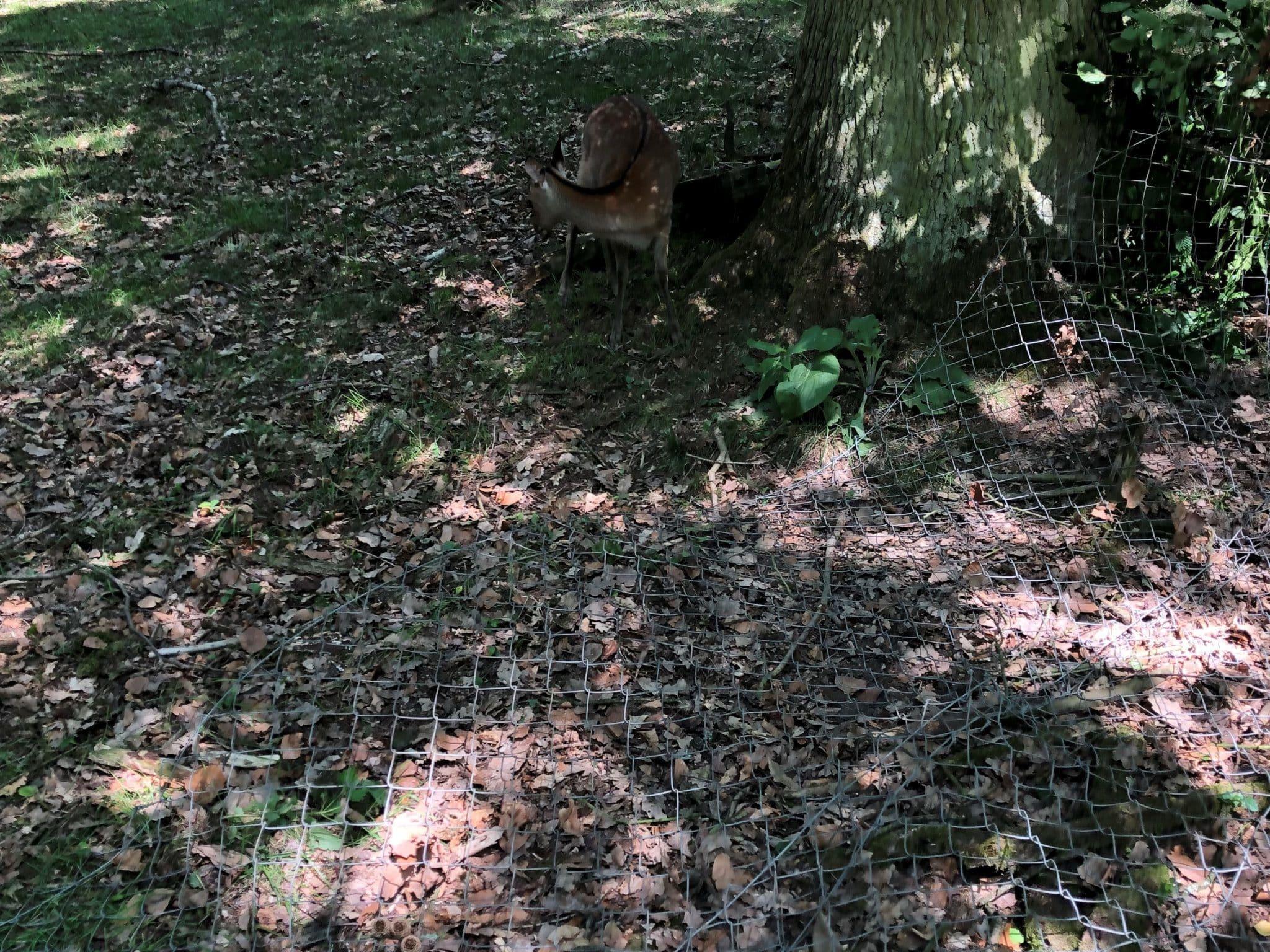umgelegtes Gefelcht als Untergrabschutz Otterschutz Wolfschutz Wildschweinschutz