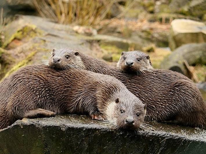 Otterschutz otterschutzzaun