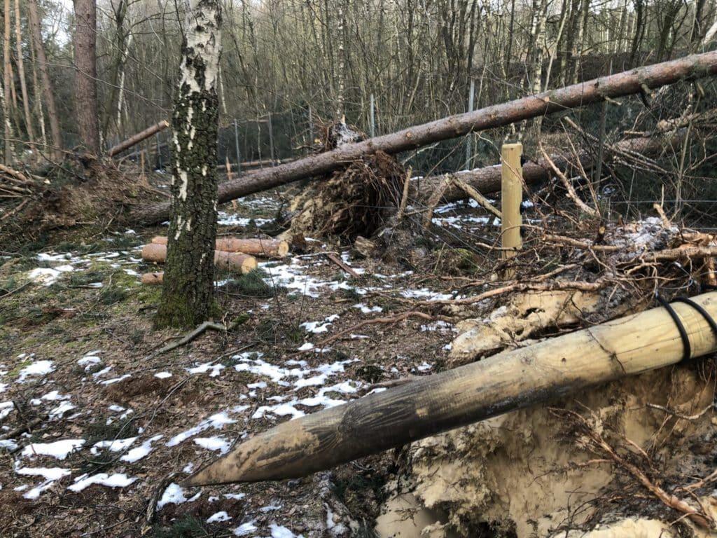 Sturmschadenbeseitigung Wildschweinzaun Wildschweinschutzzaun