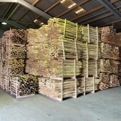 Robinienpfosten für ASP Zaunbau lagernd
